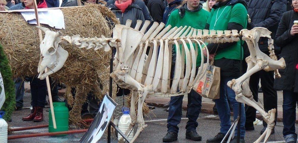 Литовские фермеры: правительство развалило сельское хозяйство страны