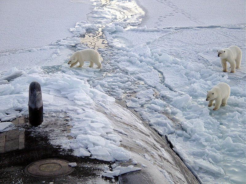"""""""Arktyka bez lodu"""""""