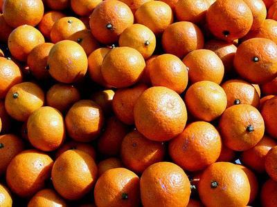 Nielegalna podróż w pomarańczach