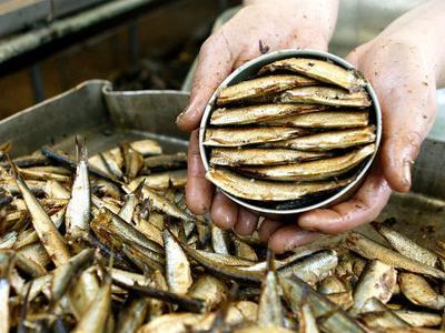 Чтобы определится,  будет ли отменен запрет на импорт эстонской рыбной продукции – инспекции на рыбокомбинатах