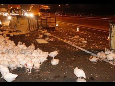 Trafic blocat de… găini (VIDEO)
