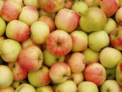 Импорт белорусских яблок и грибов в РФ в 2015 году в пять раз превысил собранный урожай