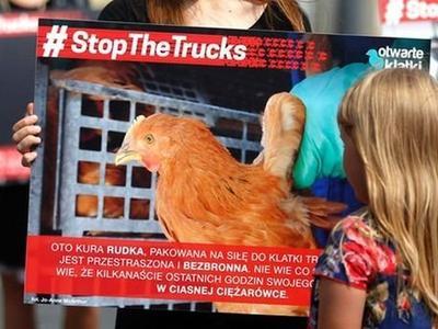 Свыше миллиона подписей под запретом транспортировки живых животных на очень дальние расстояния