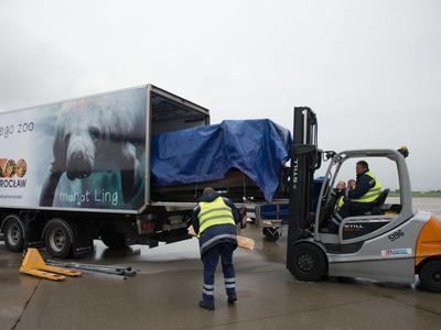 Niezwykły transport do wrocławskiego ZOO. Wodne ssaki w naczepie tira