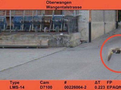 Der Blitzer in einer Schweizer Kleinstadt hat einen ungewöhnlichen Straßenpiraten erwischt. Den Strafzettel muss… eine Ente bezahlen?
