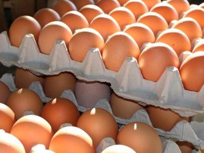 InfoTRUMPAI: Lietuviai į Lenkiją eksportavo daugiau kiaušinių | Kalakutienos gamyba Lietuvoje išaugo net 13 proc.