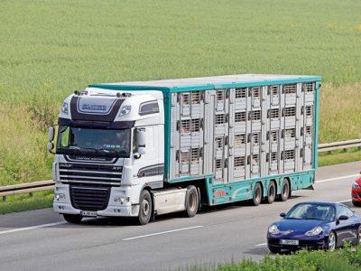 Ar Lenkijos ministro sprendimas dėl kiaulienos importo paveiks Lietuvos įmones?