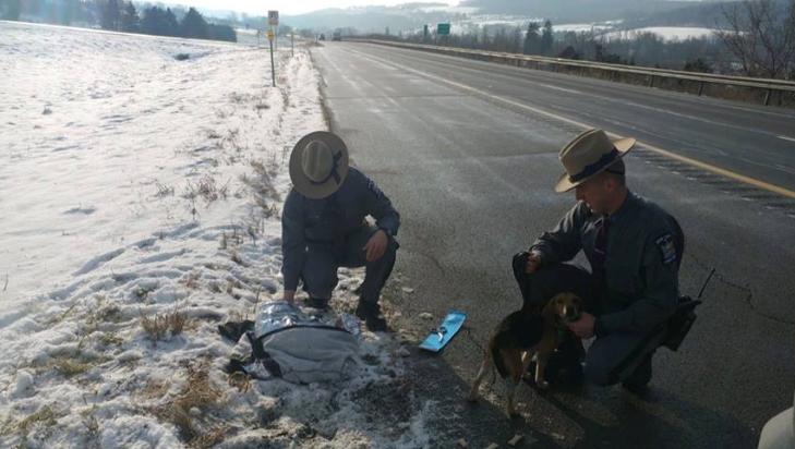 Trucker uratował dwa psy wyrzucone na pobocze. Policja szuka właściciela
