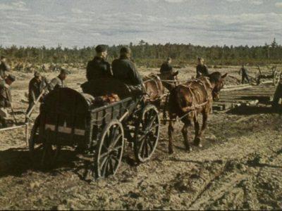 Historia transportu – odc. 52. Niemcom doskwierał brak ciężarówek. Dlatego na froncie wschodnim rekwirowali furmanki