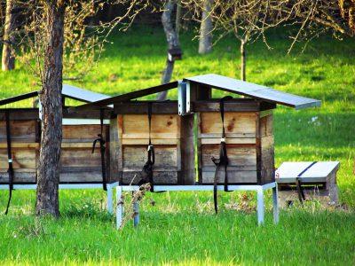 Centra logistyczne zyskały nową funkcję. Są domem dla… pszczół