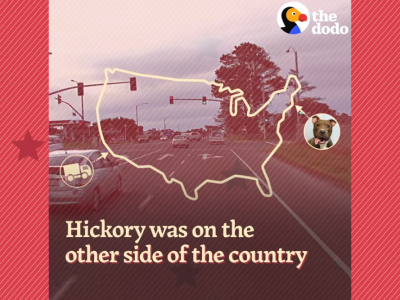 Trucker przejechał ponad 4,5 tys. kilometrów, by uratować psa. Pomógł szef