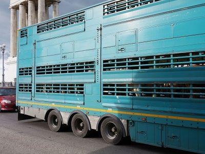Z powodu upałów Francuzi wprowadzili zakaz przewozu zwierząt. Zobacz, gdzie obowiązuje
