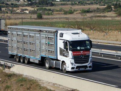 Транспортировка живых животных в Европе, ч. 2/2. Проверьте, какие обязанности имеют перевозчик и водитель