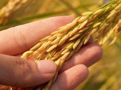 Ważne zmiany w przepisach dotyczących importu żywności. Już musisz ich przestrzegać!