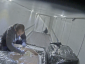 Rumunijos tarnybos sulaikė 5 krovinius iš sunkvežimių vagiančios grupes. Virš 40 įtariamųjų už grotų