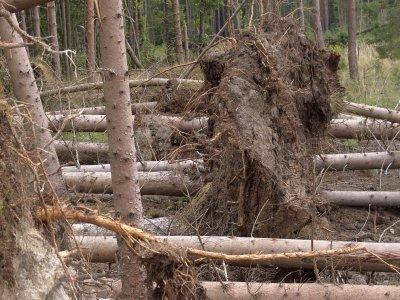 Kabotageregeln für Holztransporte bleiben unverändert bestehen