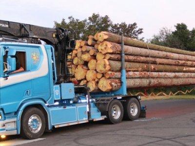 Überraschendes Ergebnis einer Lkw-Kontrolle. Erstaunliche Überladung eines Langholztransporters