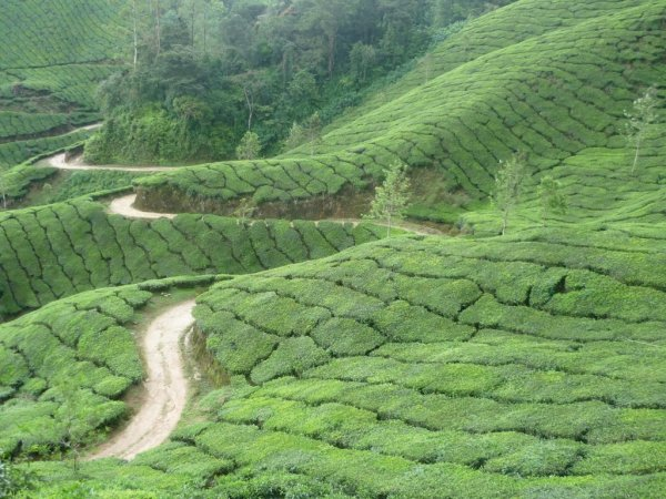 India's supply chain struggles contributing to rise in tea prices