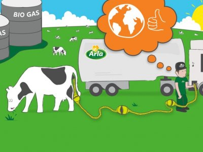 How cow manure is helping to fuel a dairy producer's milk tankers
