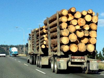 România | Camion confiscat și amendă de 15.000 RON pentru transportul ilegal de lemn