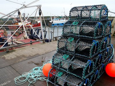 Export of fresh Scottish seafood has been hampered due to Brexit customs, industry says