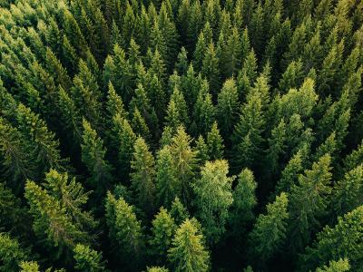 Technologia na ratunek drzewom, czyli jakie korzyści daje zastosowanie EDI